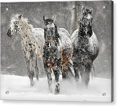 Appaloosa Winter Acrylic Print by Wade Aiken