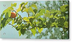 Apple A Day Acrylic Print by Karen Ilari