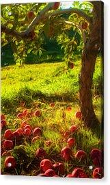 Apple Picking Acrylic Print by Joann Vitali