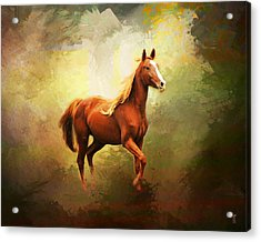 Arabian Horse Acrylic Print by Jai Johnson