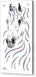 Arabian Horse Style Acrylic Print by Kelli Swan