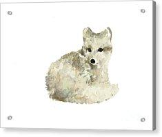 Arctic Fox Watercolor Art Print Painting Acrylic Print by Joanna Szmerdt