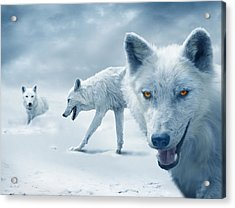 Arctic Wolves Acrylic Print by Mal Bray