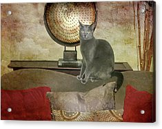 Cat-tastic Acrylic Print by Diana Angstadt