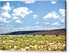 Arizona Desert Horses Acrylic Print by Ryan Kelly
