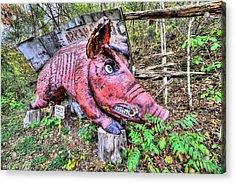 Arkansas Razorbacks Acrylic Print by JC Findley