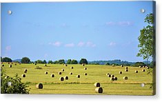 As Far As You Can See Acrylic Print by Jan Amiss Photography