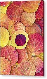 Aspen Fall Acrylic Print by Tim Gainey