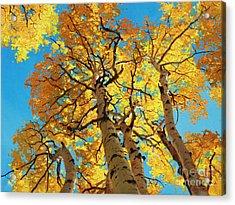 Aspen Sky High 2 Acrylic Print by Gary Kim
