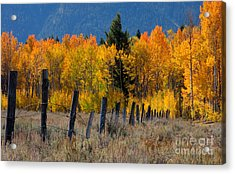 Aspens And Fence Acrylic Print by Idaho Scenic Images Linda Lantzy