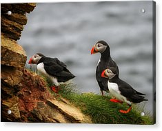 Atlantic Puffins Acrylic Print by Mountain Dreams