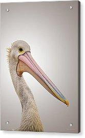 Australian Pelican Acrylic Print by Wim Lanclus