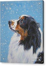 Australian Shepherd In Snow Acrylic Print by Lee Ann Shepard