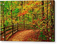 Autumn Bend - Allaire State Park Acrylic Print by Angie Tirado