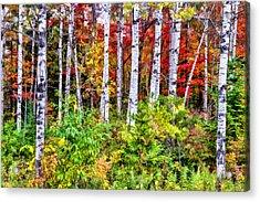 Autumn Birches Acrylic Print by Christopher Arndt