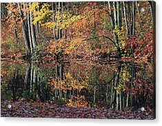 Autumn Colors Reflect Acrylic Print by Karol Livote
