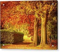 Autumn Colors Acrylic Print by Wim Lanclus