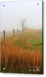 Autumn Grasses Acrylic Print by Julie Lueders