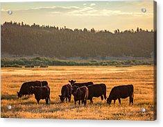 Autumn Herd Acrylic Print by Todd Klassy