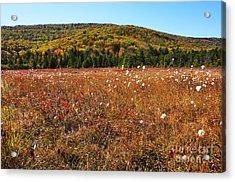 Autumn In The Glades Acrylic Print by Thomas R Fletcher
