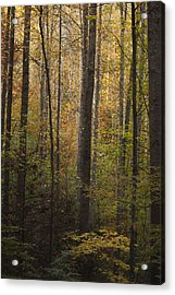 Autumn In The Woods Acrylic Print by Andrew Soundarajan