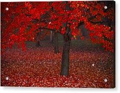Autumn Acrylic Print by Jane Melgaard