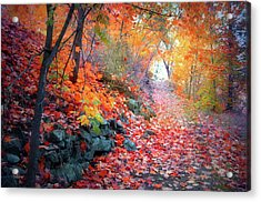 Autumn Light At The End Of The Path Acrylic Print by Tara Turner