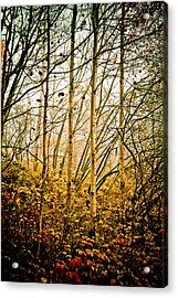 autumn Lines Acrylic Print by Maggie Terlecki