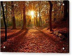 Autumn Magic Acrylic Print by Roeselien Raimond