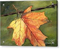 Autumn Maple Leaf Acrylic Print by Antony Galbraith