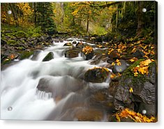 Autumn Passages Acrylic Print by Mike  Dawson