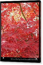 Autumn Red Poster Acrylic Print by Carol Groenen