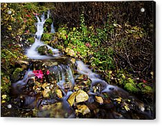 Autumn Stream Acrylic Print by Chad Dutson