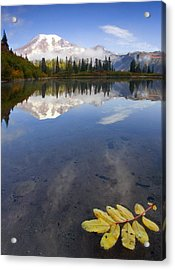 Autumn Suspended Acrylic Print by Mike  Dawson