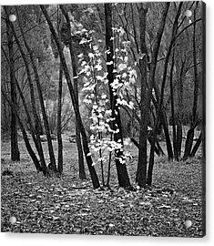 Autumn Tones Acrylic Print by Odille Esmonde-Morgan