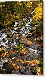 Autumn Tumbles Down Acrylic Print by Mike  Dawson