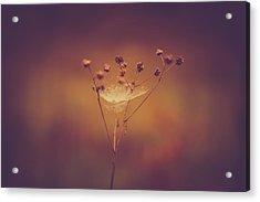Autumn Web Acrylic Print by Shane Holsclaw