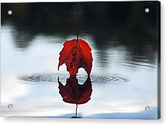 Autumns Final Descent Acrylic Print by William Carroll