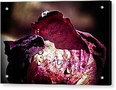 Axl Rose Acrylic Print by Karen M Scovill