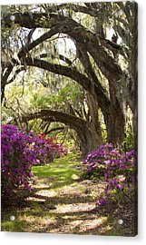 Azaleas And Live Oaks At Magnolia Plantation Gardens Acrylic Print by Dustin K Ryan