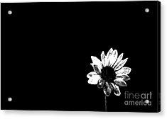 B/w Flower  Acrylic Print by Juls Adams