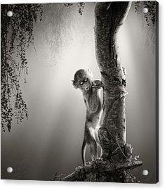 Baby Baboon Acrylic Print by Johan Swanepoel