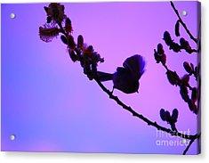 Baby Bird Silhouette Acrylic Print by Nick Gustafson