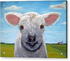 Baby Farm Lamb Sheep  Acrylic Print by Linda Apple