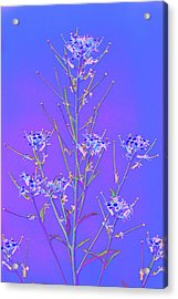 Baby It's Cold Outside Acrylic Print by Richard Henne