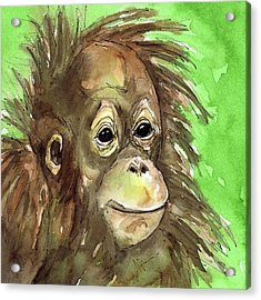 Baby Orangutan Wildlife Painting Acrylic Print by Cherilynn Wood