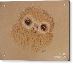 Baby Sloth Acrylic Print by Ginny Youngblood