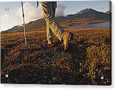 Backpacker Hikes Across Tundra In Logan Acrylic Print by Gordon Wiltsie