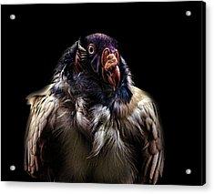 Bad Birdy Acrylic Print by Martin Newman