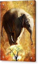 Balance Acrylic Print by Trudi Simmonds